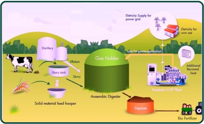What Is Biomass.